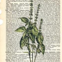Dictionary Book Page Art print Basil herb