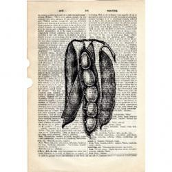 Dictionary Book Page Art print vegetables food Peas